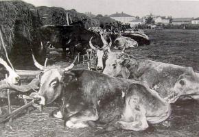 Уменьшение пая по поставке скота от Харьковской губ.